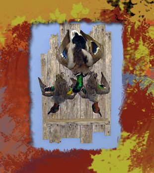 teal and mallard dead mount