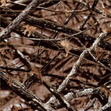 SWG-042_339 Mathews Lost Camo